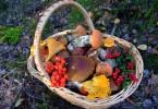 Таблица калорийности грибов