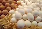 Таблица калорийности яиц