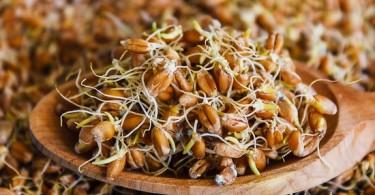 Проросшая пшеница: как правильно употреблять и выращивать?