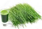 Почему так полезны ростки пшеницы?