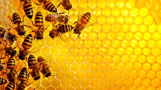 Что представляет собой мед в сотах?