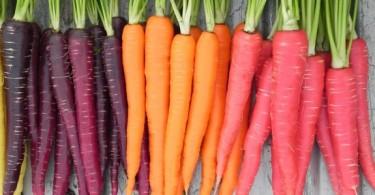 Польза моркови для организма человека