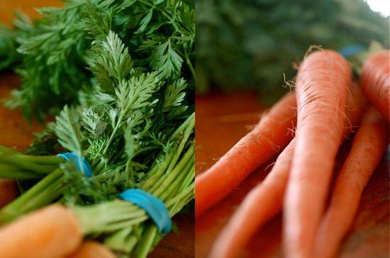 Ботва моркови: полезные свойства
