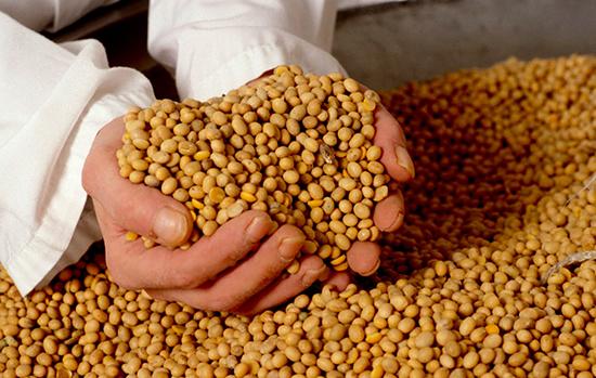 ГМО – спутник современного человека