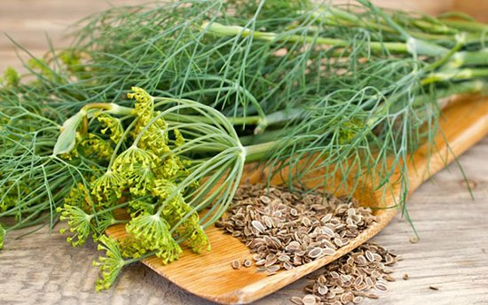 Семена укропа: потенциальный вред