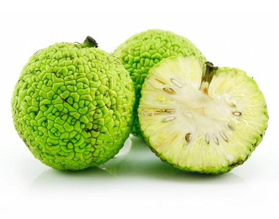Адамово яблоко: применение, полезные и лечебные свойства маклюры