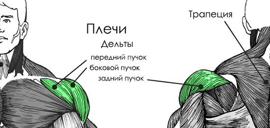 Каким же образом прокачать плечи