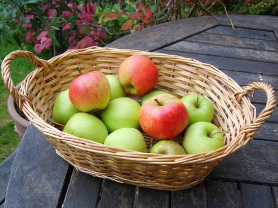 корзина яблок