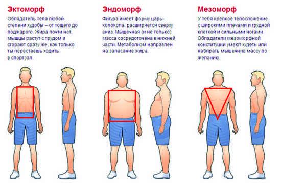 программу тренировок для эндоморфа