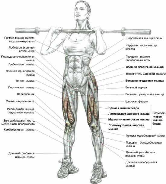 Приседания со штангой на груди: какие мышцы