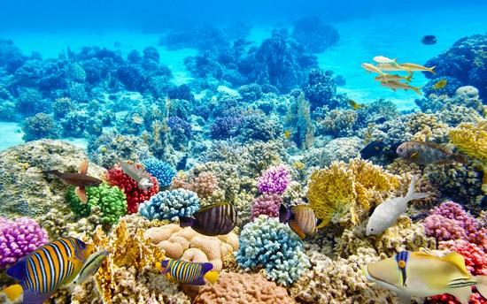 Коралловый пилинг для лица