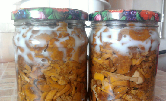 грибы лисички на зиму