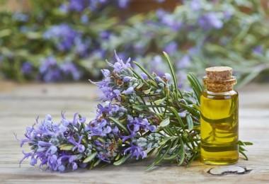 Как использовать масло розмарина в домашних условиях?