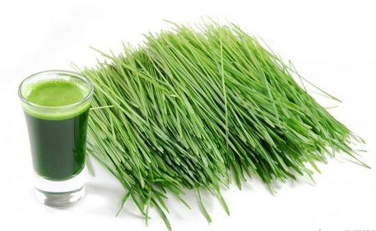 Чем полезен сок ростков пшеницы?