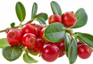 Клюква – природное лекарство