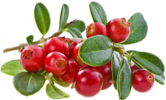 Клюква – природное лекарство для лечения многих заболеваний