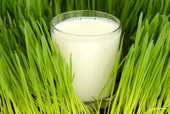 Польза козьего молока – правда или миф?
