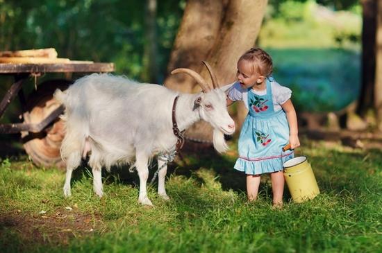 Какое молоко лучше и полезнее пить - коровье или козье?