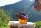Горный мед (алтайский, липовый и другие): полезные свойства и противопоказания