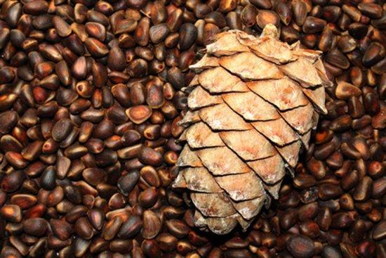 Суточная норма кедровых орехов