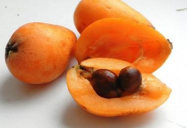 Мушмула: полезные свойства и вред фрукта, фото
