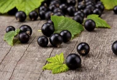 Черная смородина: полезные свойства и противопоказания, рецепт