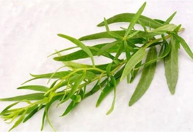 Тархун трава: полезные свойства и применение в кулинарии