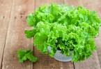 Салат латук: что это такое? Польза и вред, калорийность